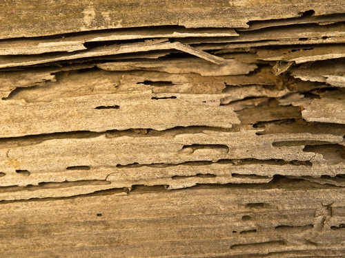 Learn how to identify a termite infestation